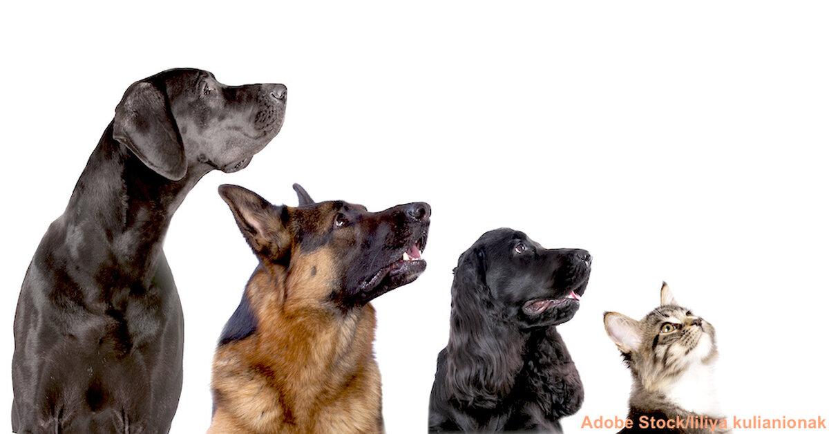 No Dogs? No Problem: 11 Canine-Like Cat Breeds