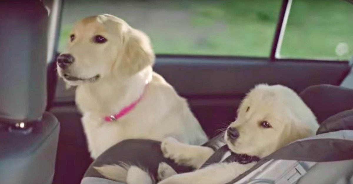 This Subaru Ad Makes Me Want To Start Watching Commercials Again. Hilarious!