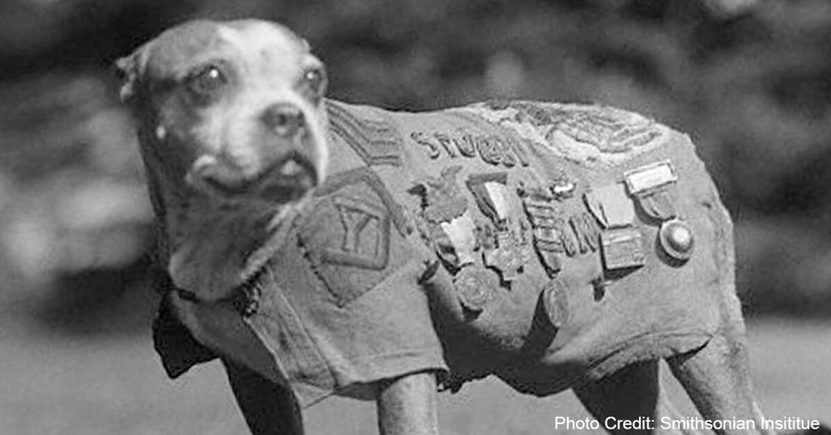 Military Dog Training Books
