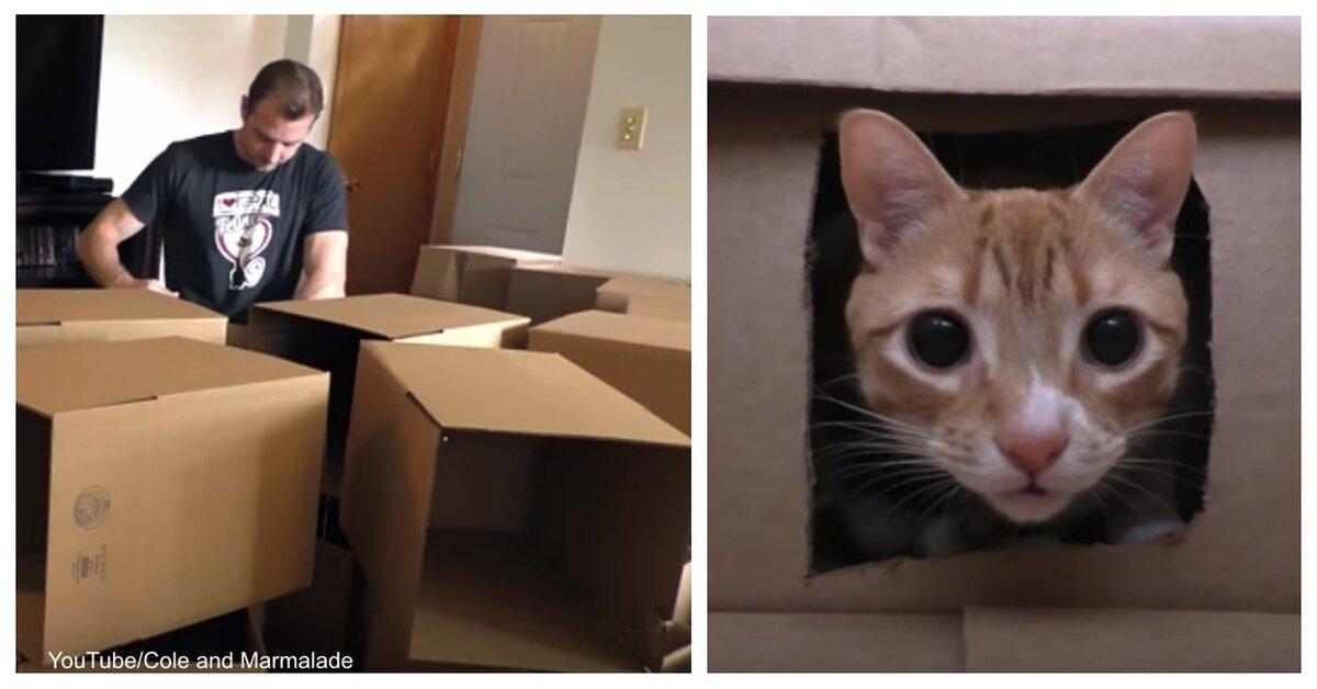 siberian cat breeder chicago
