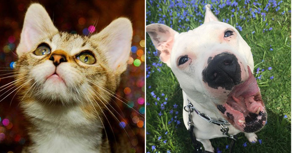 How Many Dogs And Cats Wind Up At Shelters