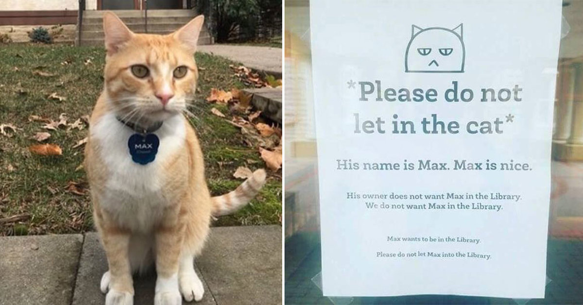 After Max The Cat Was Banned From The Library, The Internet Turned His Story Into Viral Gold (With Illustrations)