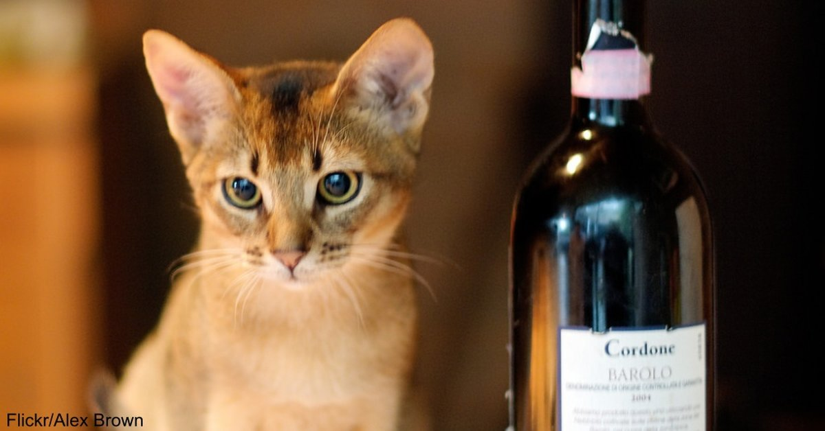"""National Drink With Your Cat Week"" Is Real and It's Happening Right Now"