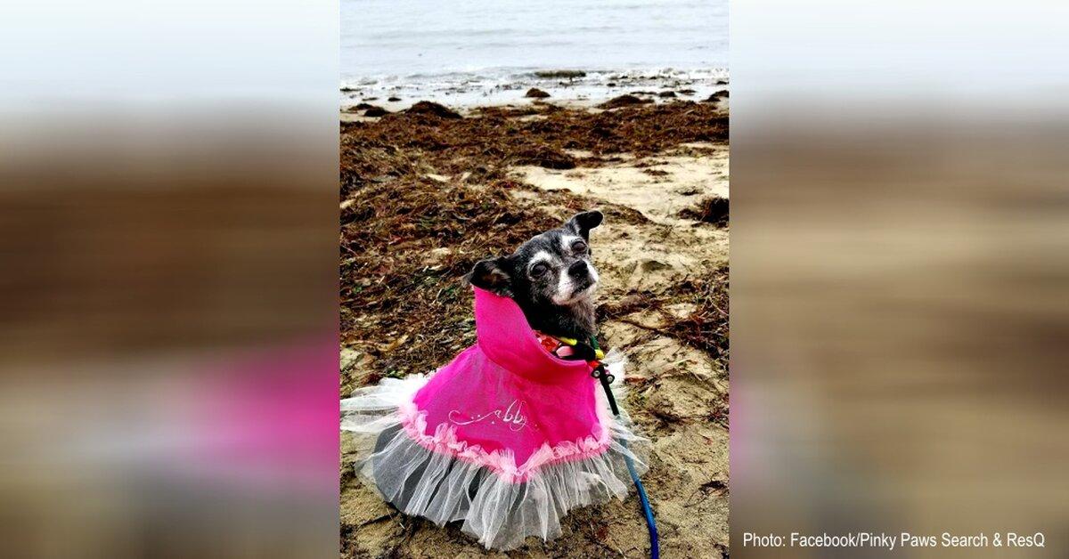 Tiny Dog Diagnosed With Terminal Cancer Has A Beach Bucket List