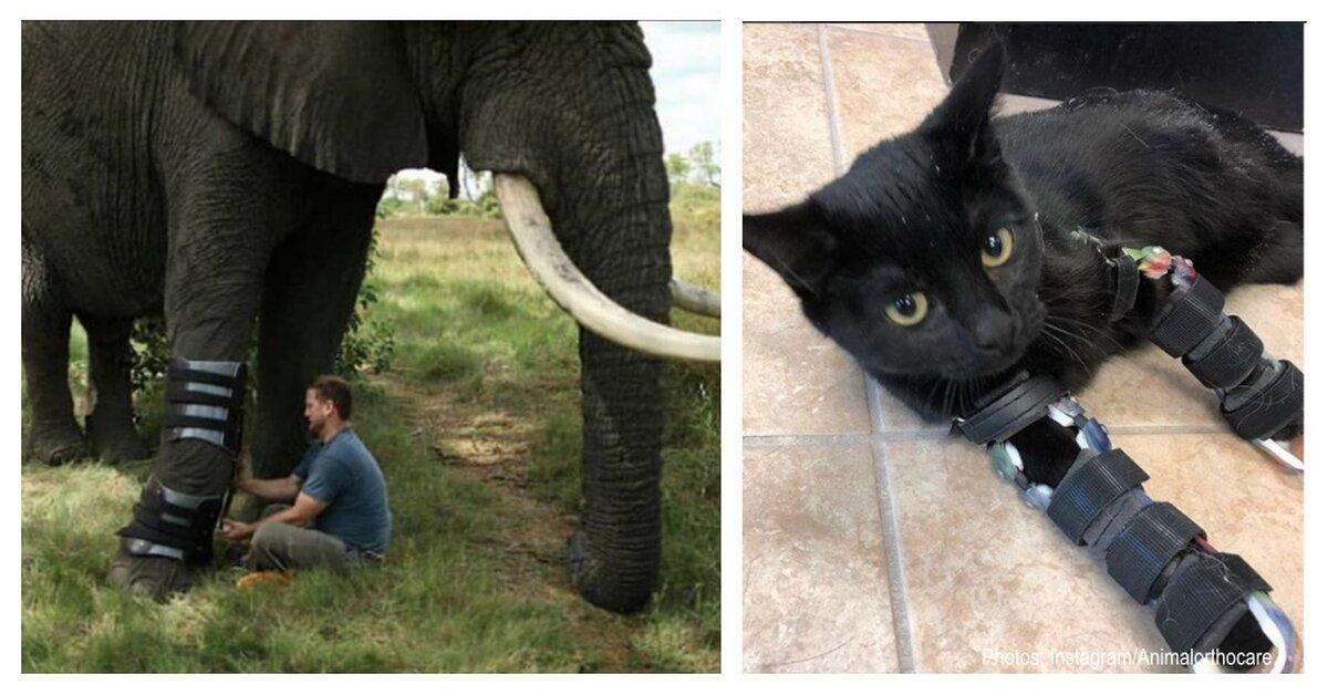 Meet The Hero That Helps Animals Of All Species Walk Again