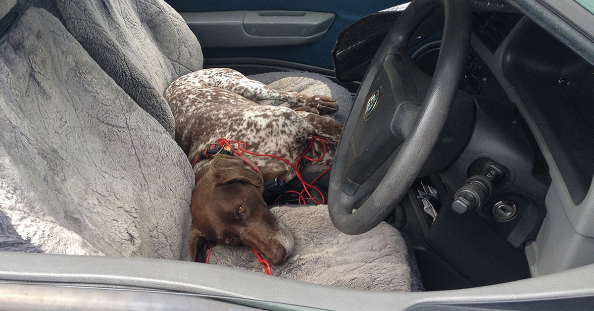 Man Arrested After Leaving Dog To Die In A Locked, Unventilated Car