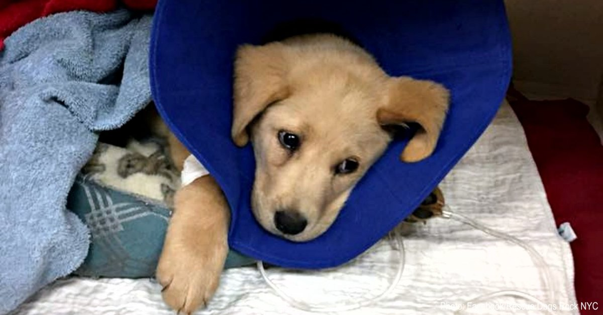 Puppy Tortured Until Unable To Walk – Then Dumped At High-Kill Shelter