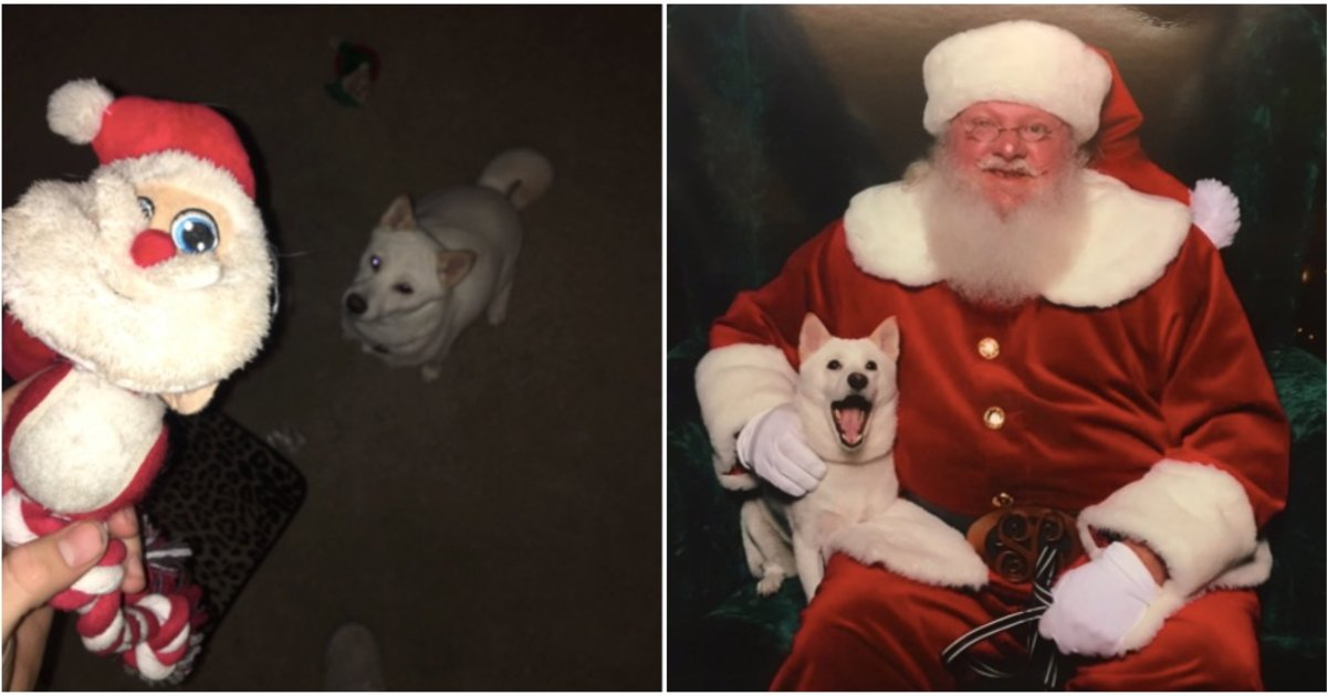 Dog Meets Her Favorite Santa Toy In Real Life And Cannot Even - Dog obsessed with stuffed santa toy gets to meet her idol in real life