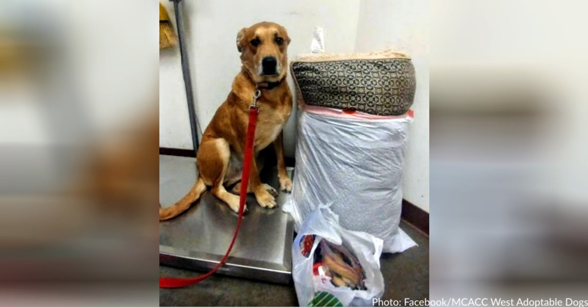 Dog Surrendered To Shelter With His Bed And All His Toys