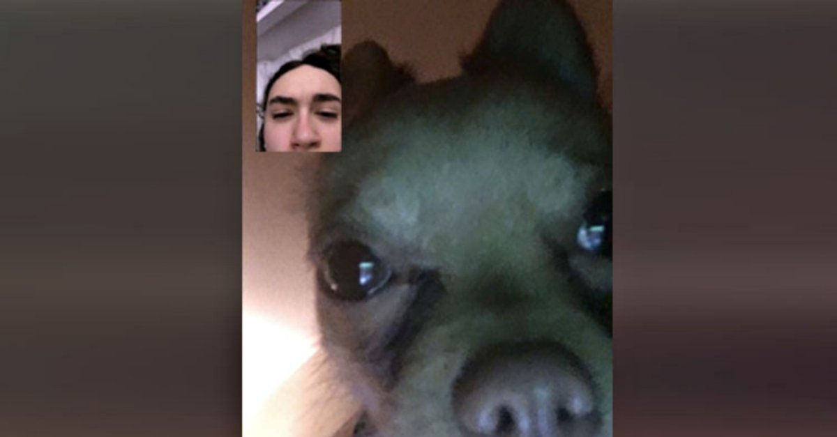 Dog Takes Over FaceTime Chat After Owner Falls Asleep & It's Too Funny.