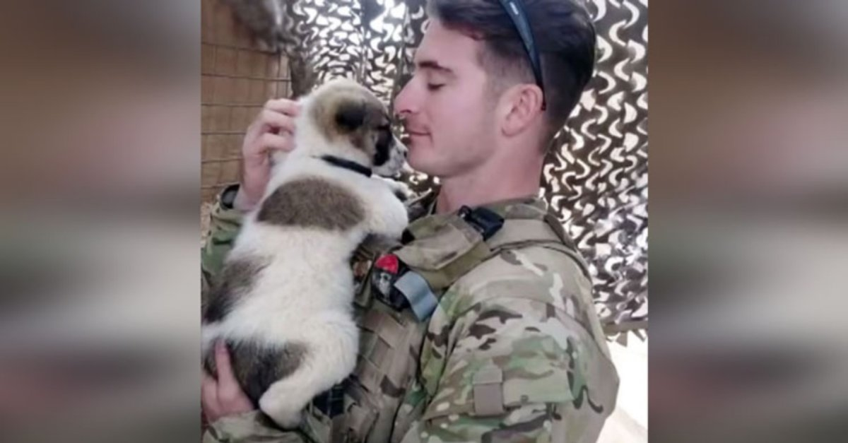 Tough Soldier Who Fell In Love With Stray Puppy In Iraq Melts During Emotional Reunion.