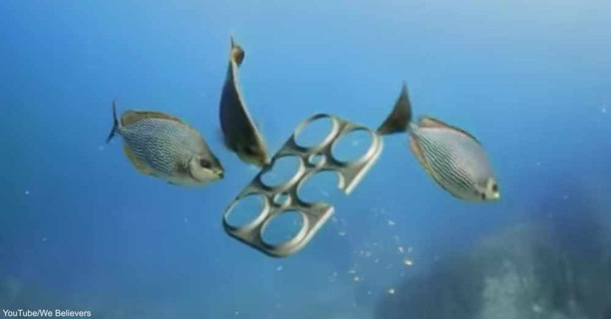 Major Beer Company Begins Using Biodegradable 6-Pack Rings That Feed Fish