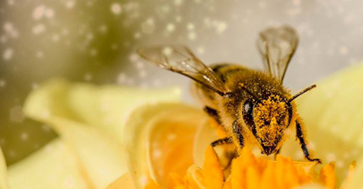 Bees Are Now Considered The Most Important Living Thing On Earth