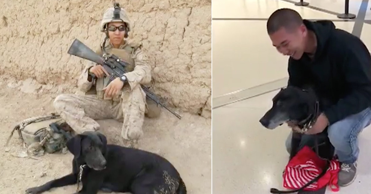 Marine Veteran Finally Reunites With Dog Who Saved His Life In Afghanistan