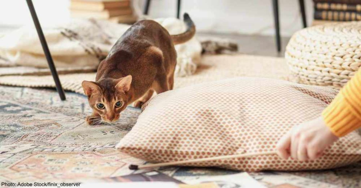 10 Dog-Friendly Cat Breeds to Add to Your Multi-Pet Home