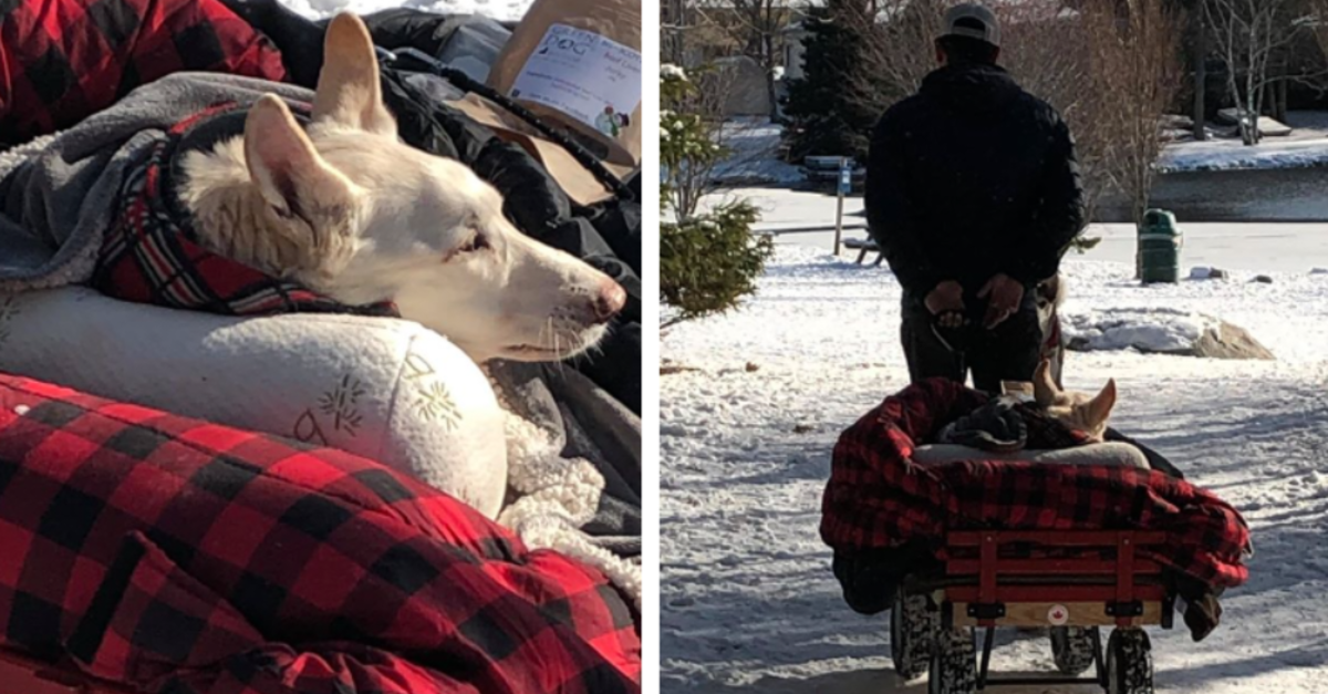 Man Walks His Paralyzed Dog In A Little Red Wagon Every Day