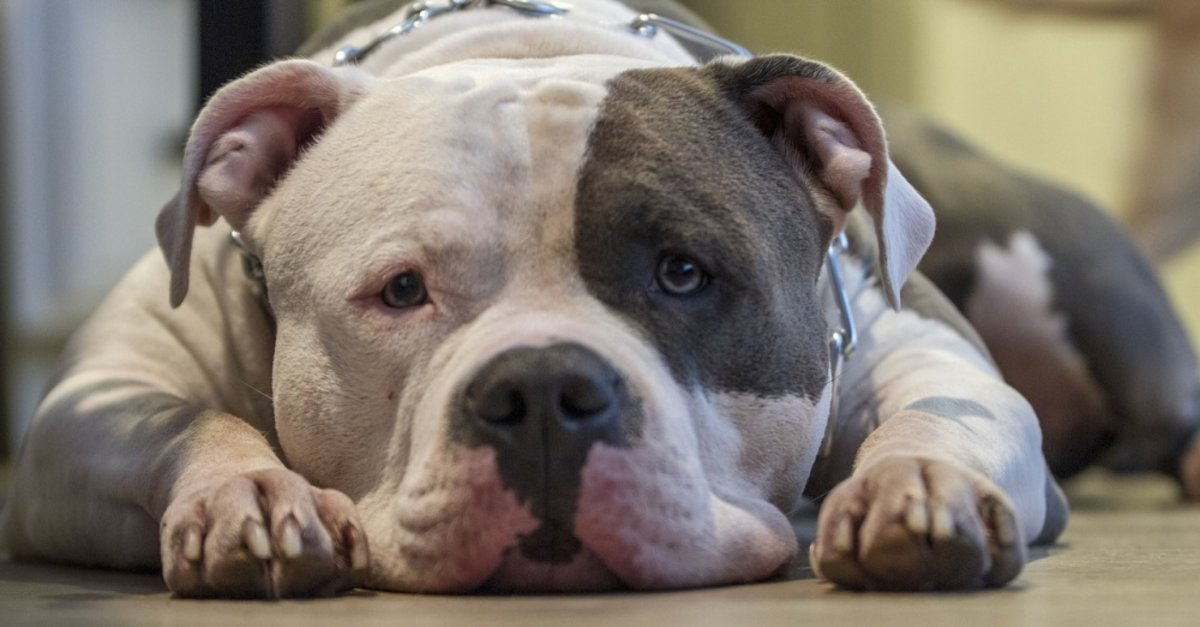 Dogs Are Adopted Faster When Shelters Forgo Breed On Profile, Study Reveals