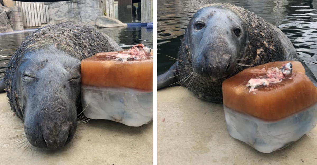 Seal Is All Smiles While Posing With His Birthday 'Fish' Cake