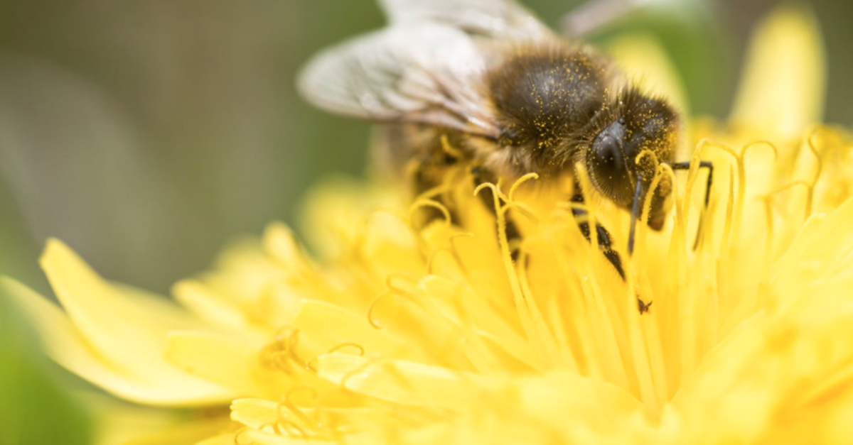 U.S. Sees Increase In Bee Population After Years Of Decline
