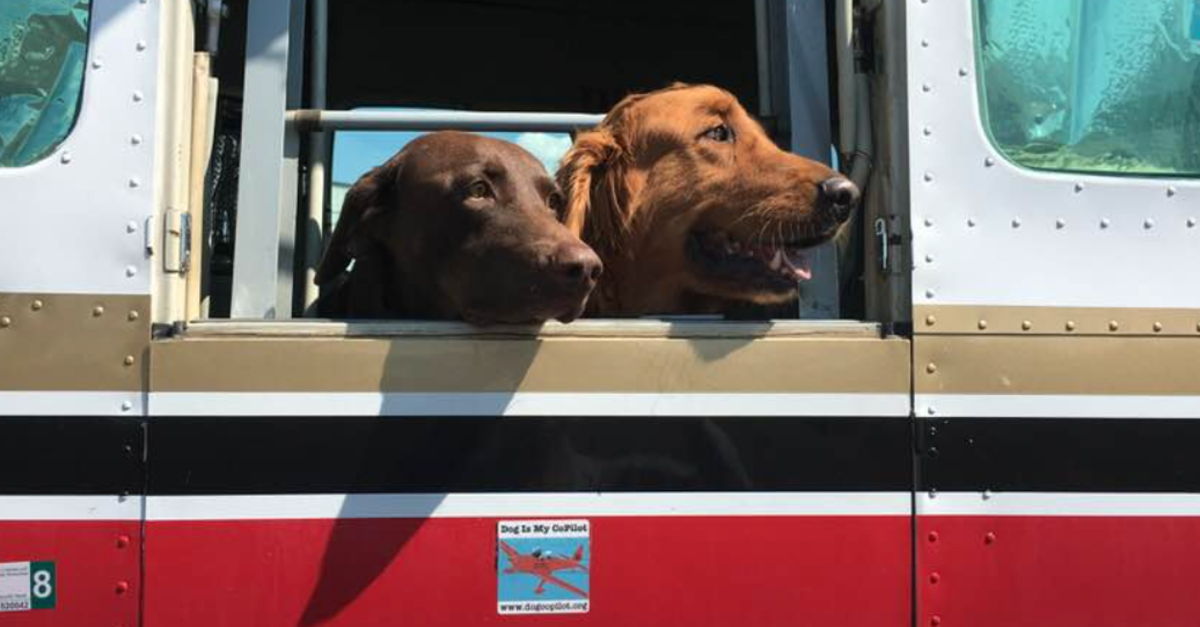 Doctor Has Flown Over 16,000 Dogs Across The Country To Safety