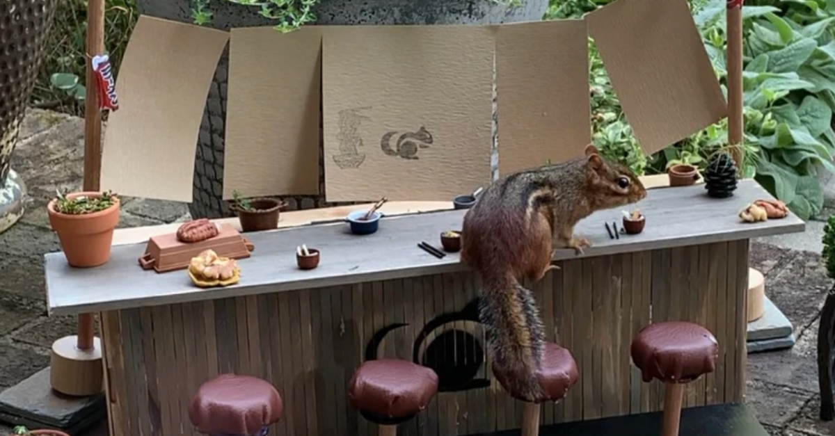 Woman Creates A 'Restaurant' With Tiny Tables For Chipmunks In Her Yard