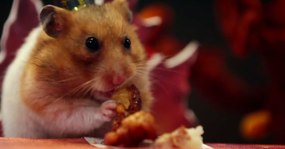 Man Makes A Tiny Thanksgiving Dinner For His Hamster And It's Too Cute