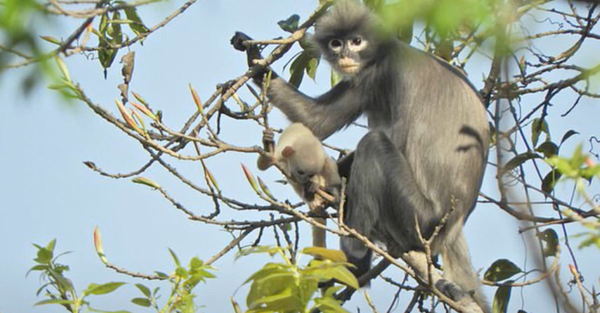 New Monkey Species Discovered, But There Are Less Than 300 Left On Earth