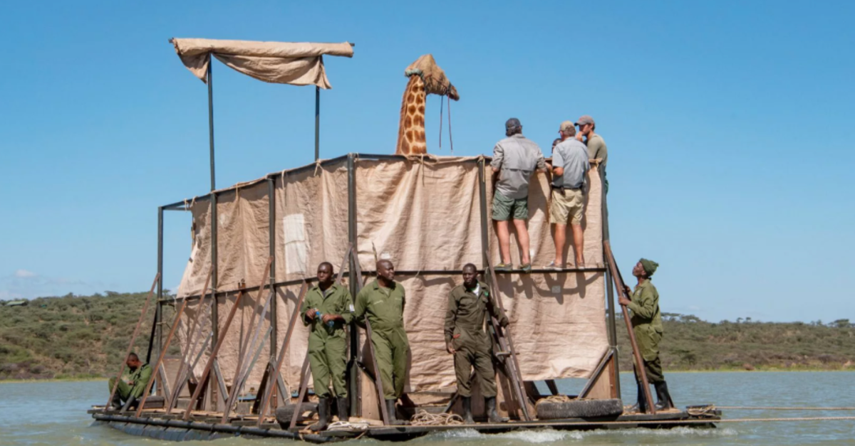 Rescuers Build A Barge To Save Giraffes Stranded On A Flooded Island