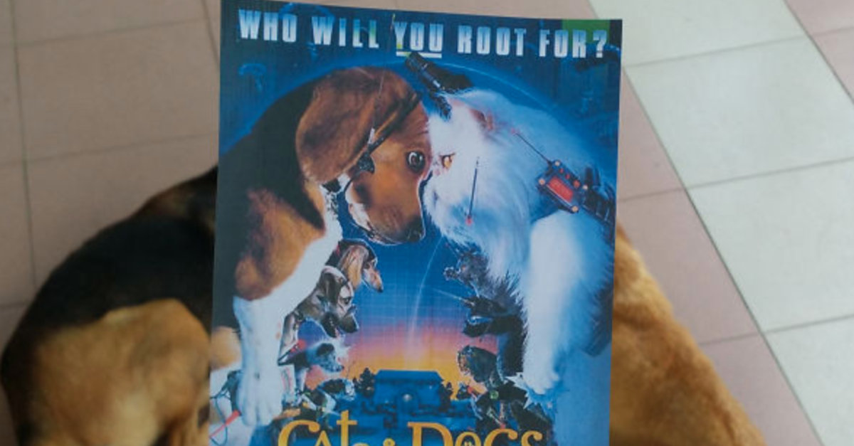 Artist Completes Movie Posters With Cats And Dogs