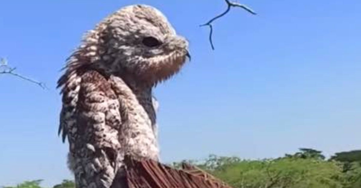 Woman Gets Spooked By Rare 'Demon Bird' With A Ghostly-Sounding Call