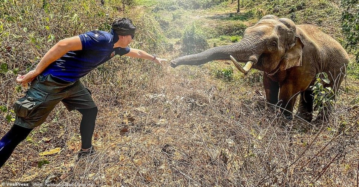Wild Elephant In Thailand Recognizes Vet Who Saved His Life 12 Years Ago