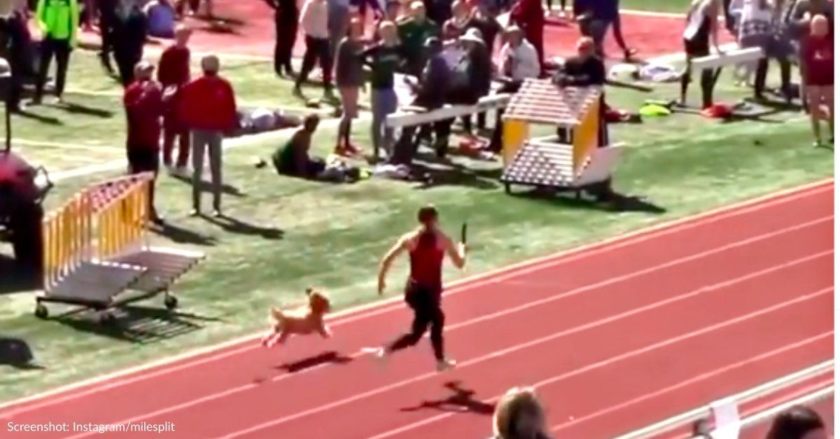 Dog Breaks Free From Owner And Wins Relay Race At High School Track Meet