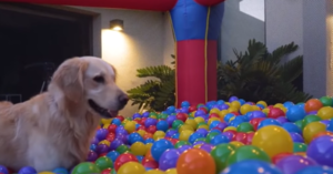 Parents Turn Bounce House Into A Ball Bit To Celebrate Their Dog's Birthday