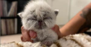 Vets Said 'Grandpa' The Kitten Should Be Euthanized But He Grew Into An Adorable Happy Cat