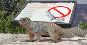 Grand Canyon National Park Warns Visitors To Keep Their Distance From Squirrels