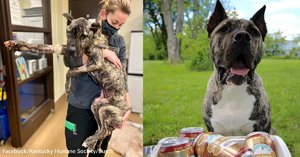 Rescued Dog Overcomes Rough Past To Become Brand's Top Dog Brew Taster