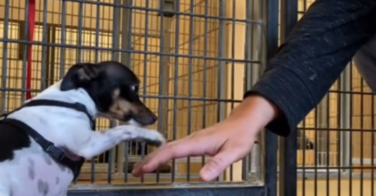 Timid Dog Can't Stop Shaking After Being Dumped At A Shelter