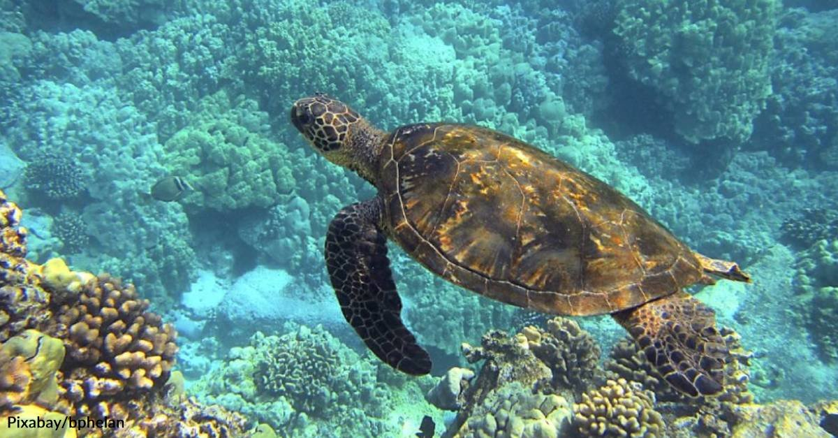 How You Can Take Small Steps to Help Turtles on World Sea Turtle Day
