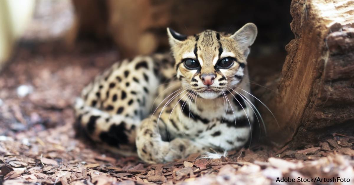 6 Scary Facts About Some of the Cutest Animals on the Planet