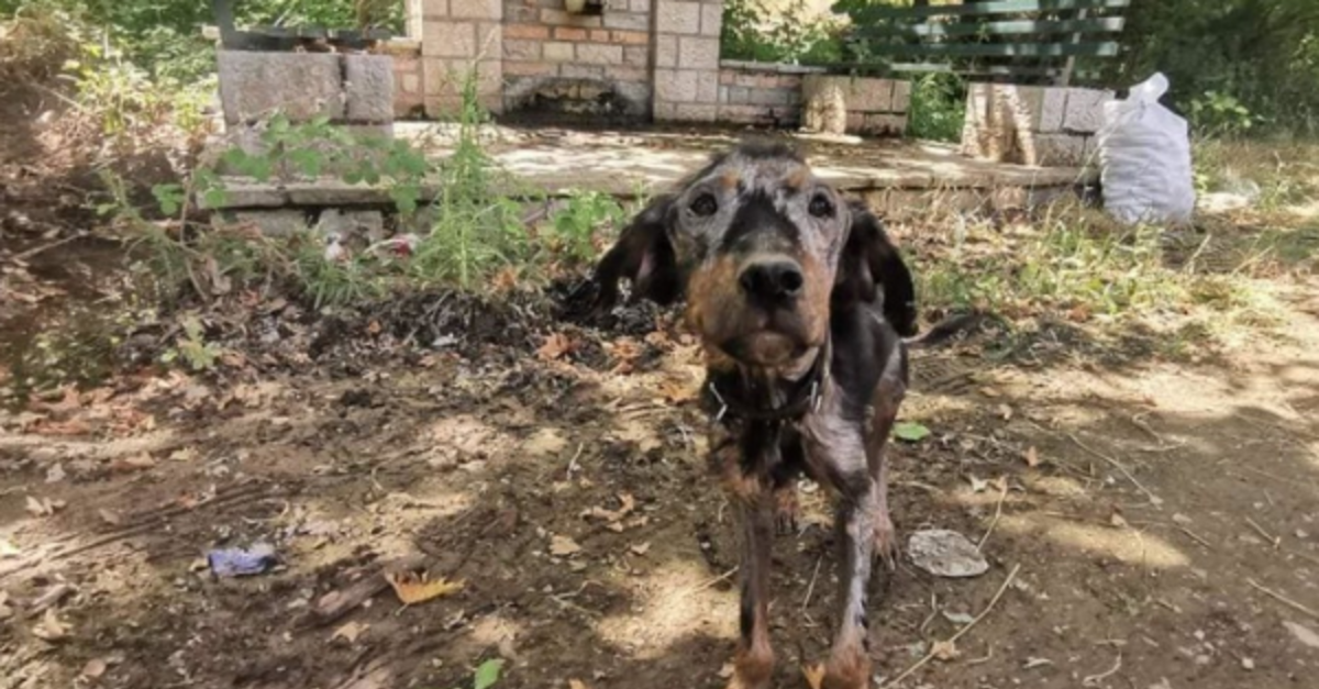 Abandoned, Starving Dog in Greece is Now Recovering Thanks to Rescuers
