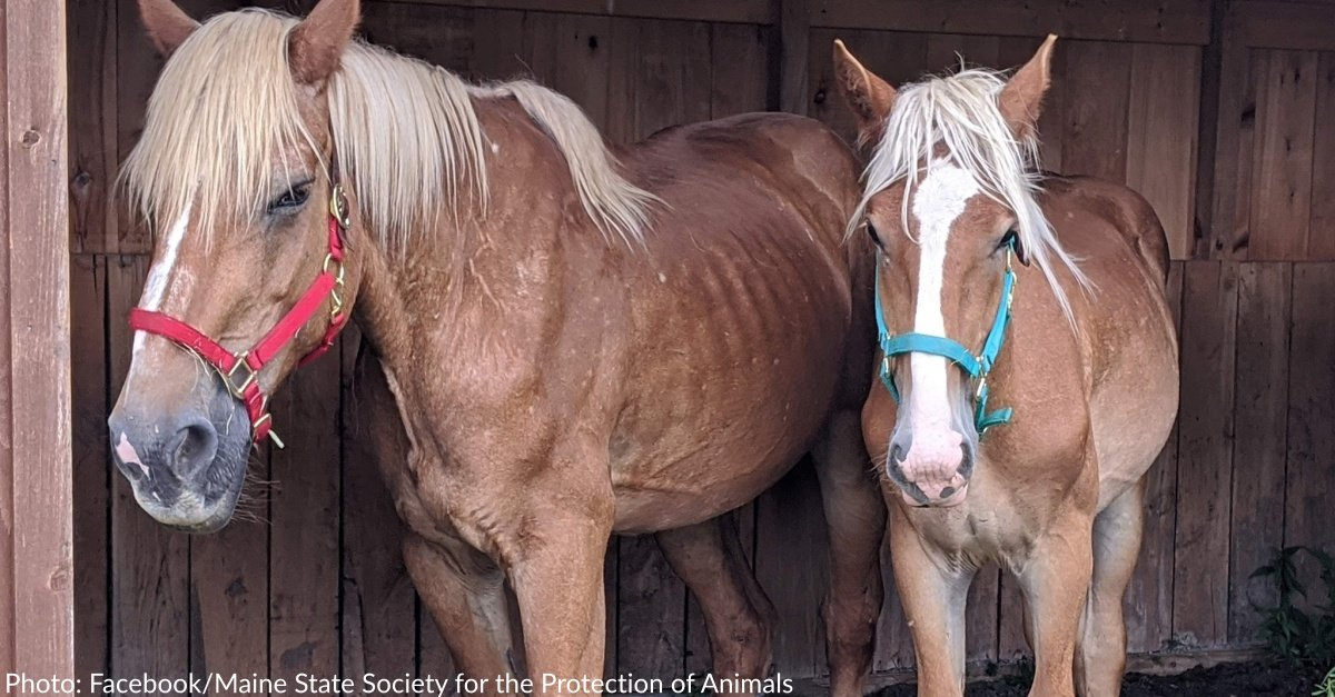 Over 50 Neglected Animals Seized From Maine Property
