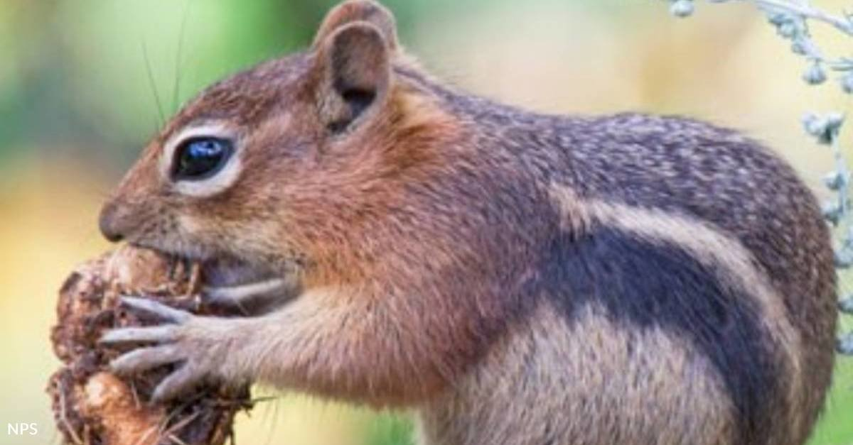 New Research Finds That Squirrels Have Their Own Personalities
