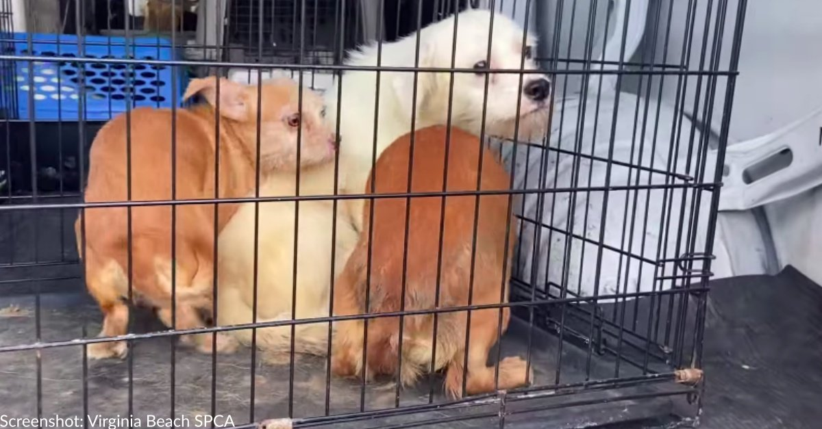 Virginia Beach SPCA Seeks Help After Rescuing 45 Dogs From Hoarding Situation