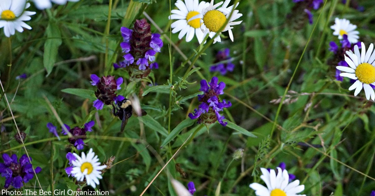 Wildflowers Are Feeding At-Risk Bees Around The Country, Thanks To You