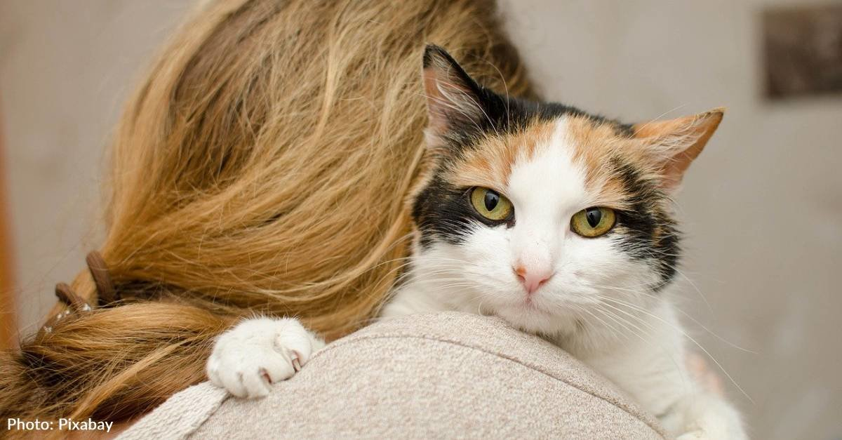 Here's Why We're Building Pet-Friendly Domestic Violence Shelters–And How You Can Help