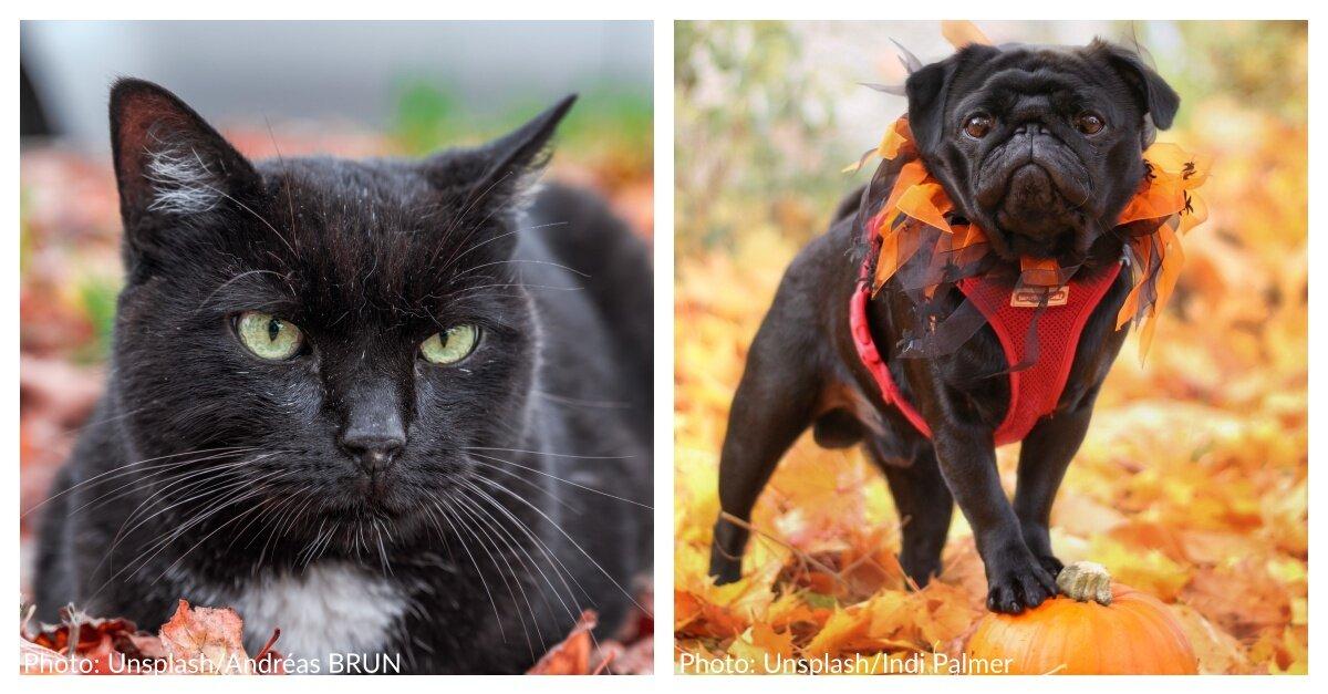 40 Halloween-Inspired Cat & Dog Names