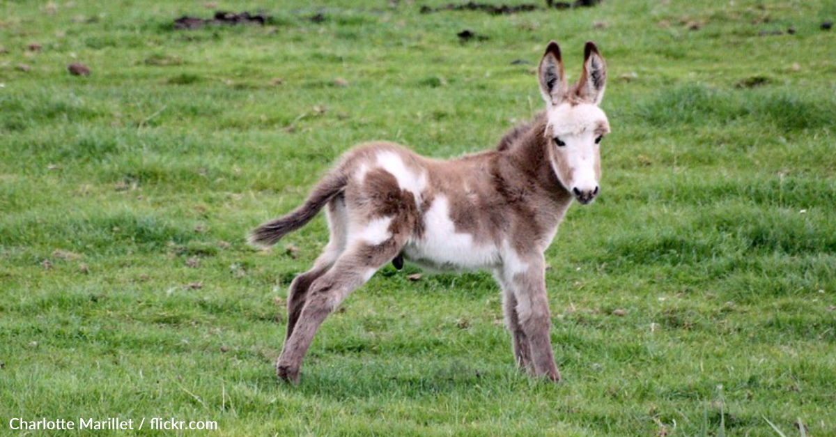 Baby Donkey Rejected By Mother Finds New Family At Sanctuary