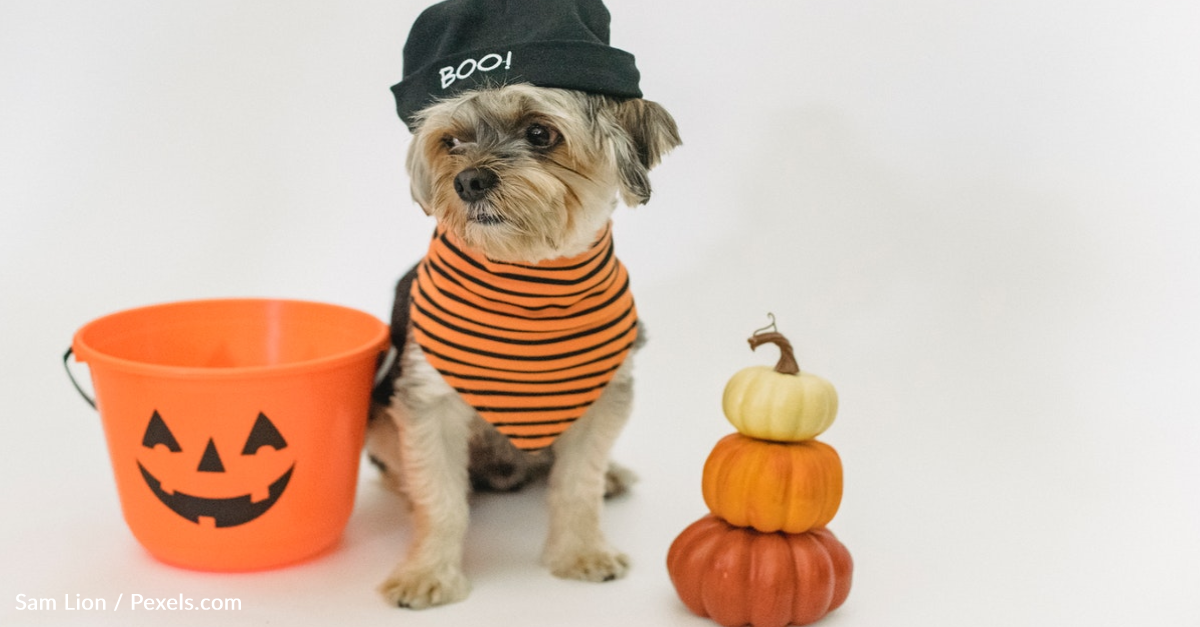 How To Make Halloween Gummy Candy For Your Dogs
