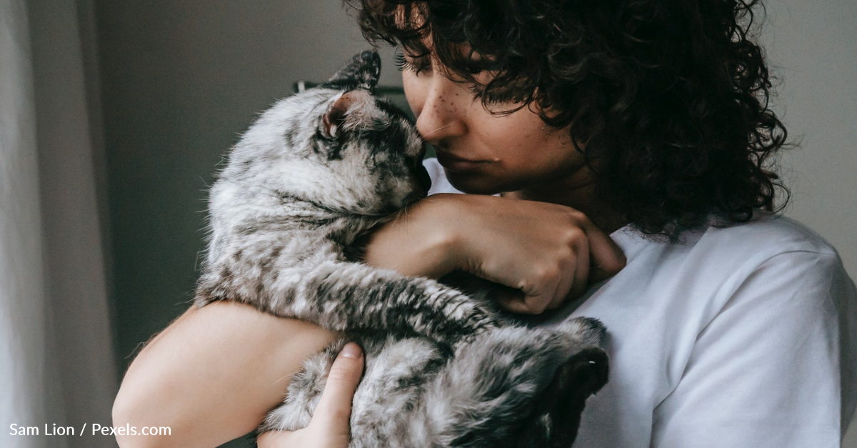 Did You Know That Cats Could Be As Affectionate As Dogs?
