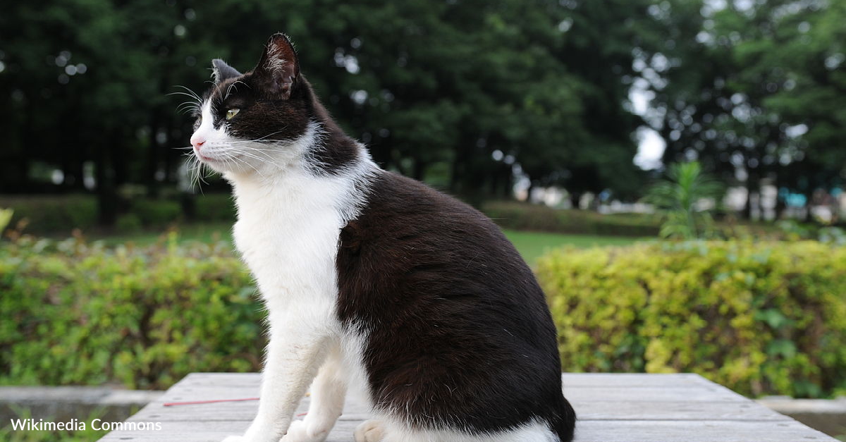 Badly Injured Cat Gets A Second Chance At Life